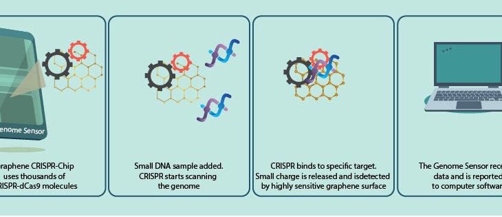 Genome sensor detects DNA by CRISPR-Chip