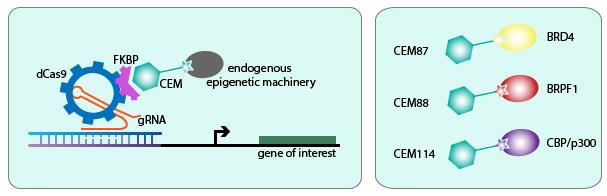 CRISPR tunable activation