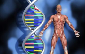 gene editing Duchene muscular dystrophy
