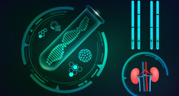 CRISPR-based assay for kidney transplant diagnostics