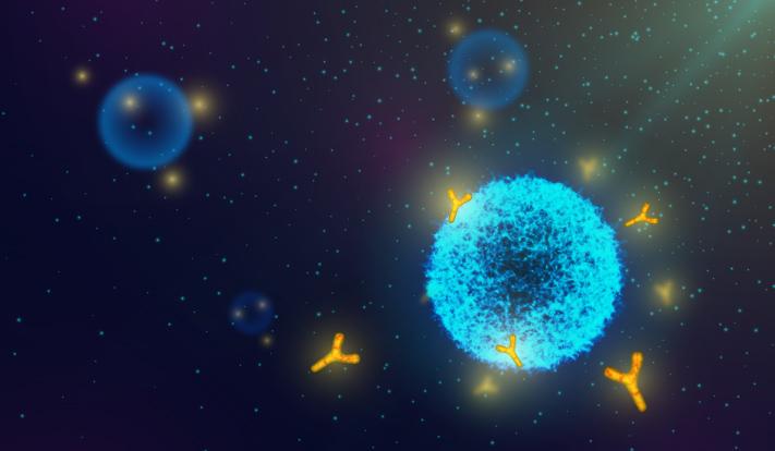 cancer immunity