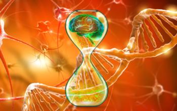 B cell depletion alleviates Alzheimer's disease progression