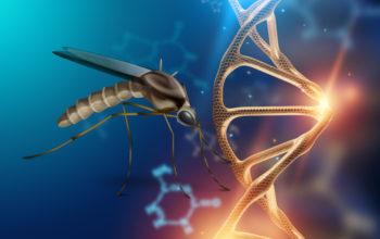 bioengineered mosquito to control disease