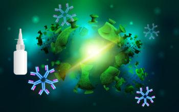 Nasal hybrid antibodies protect against COVID-19